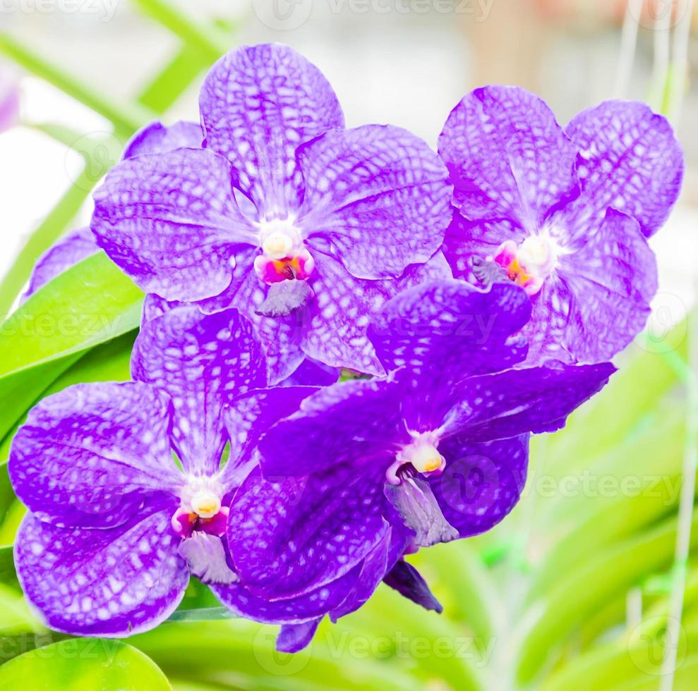 Orchidee foto
