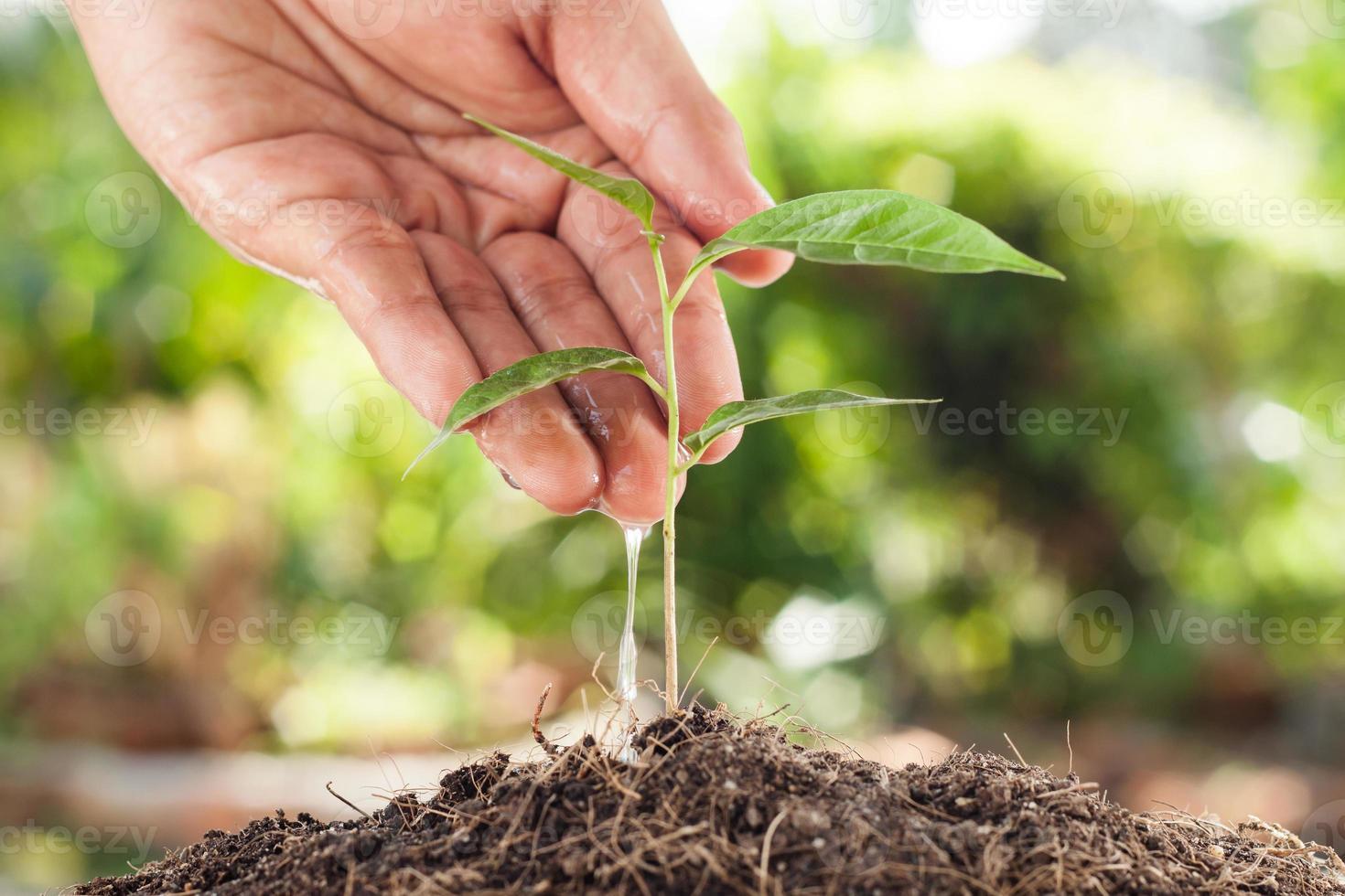 Bauernhand, die eine junge Pflanze mit grünem Bokehhintergrund wässert foto