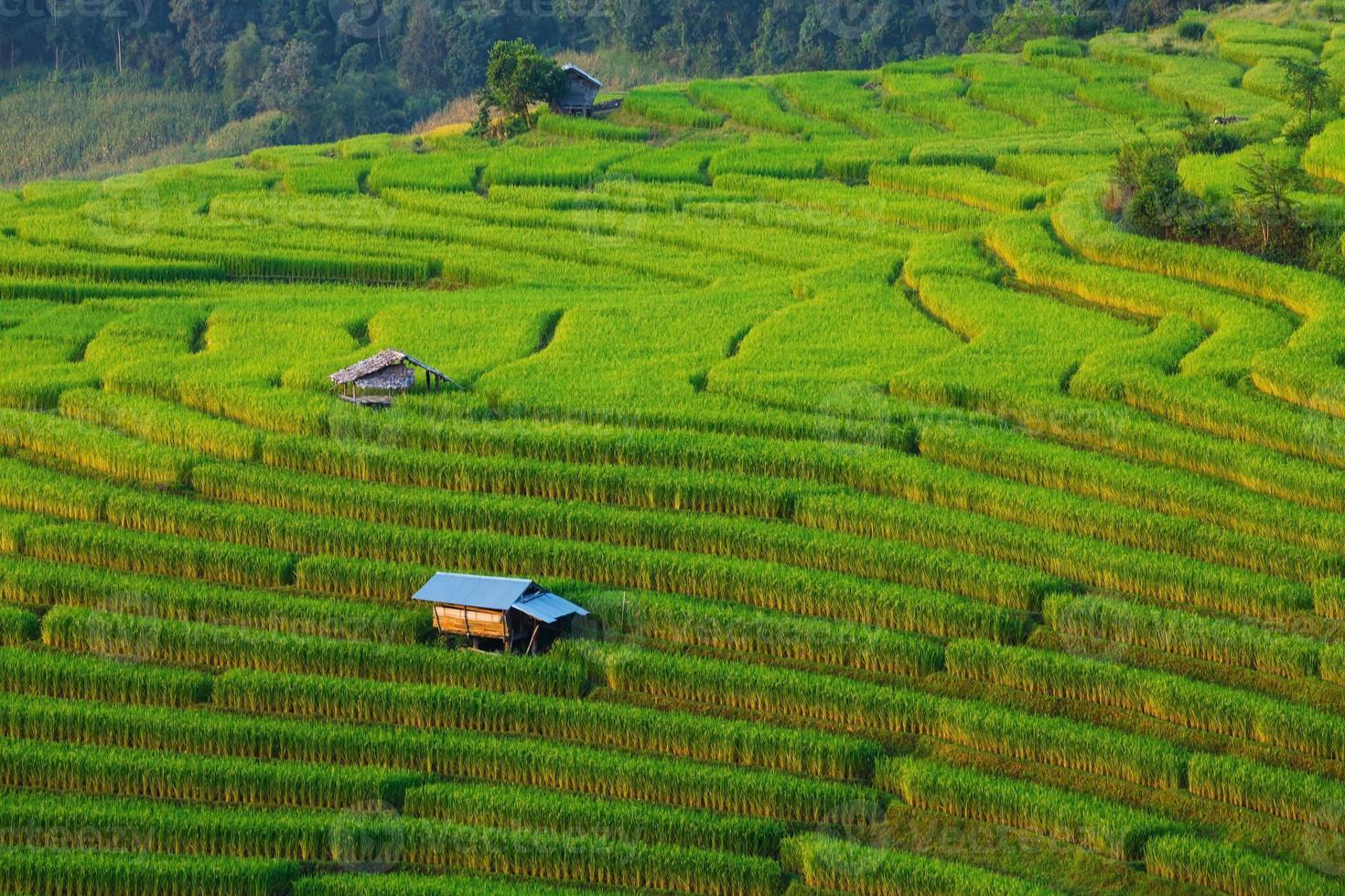 grünes terrassiertes Reisfeld bei Ban Pa Bong Peay foto