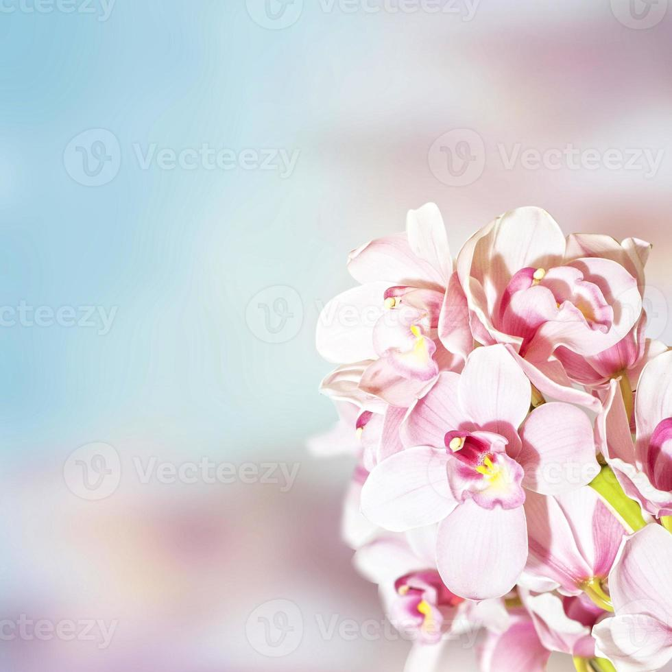 Orchideen foto