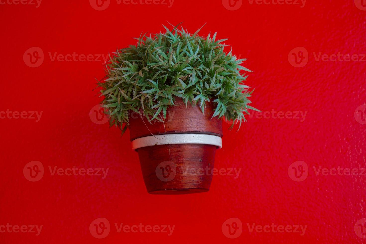 grünes Gras im Blumentopf an der roten Wand foto
