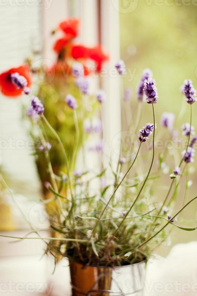 Lavendel und Mohn foto