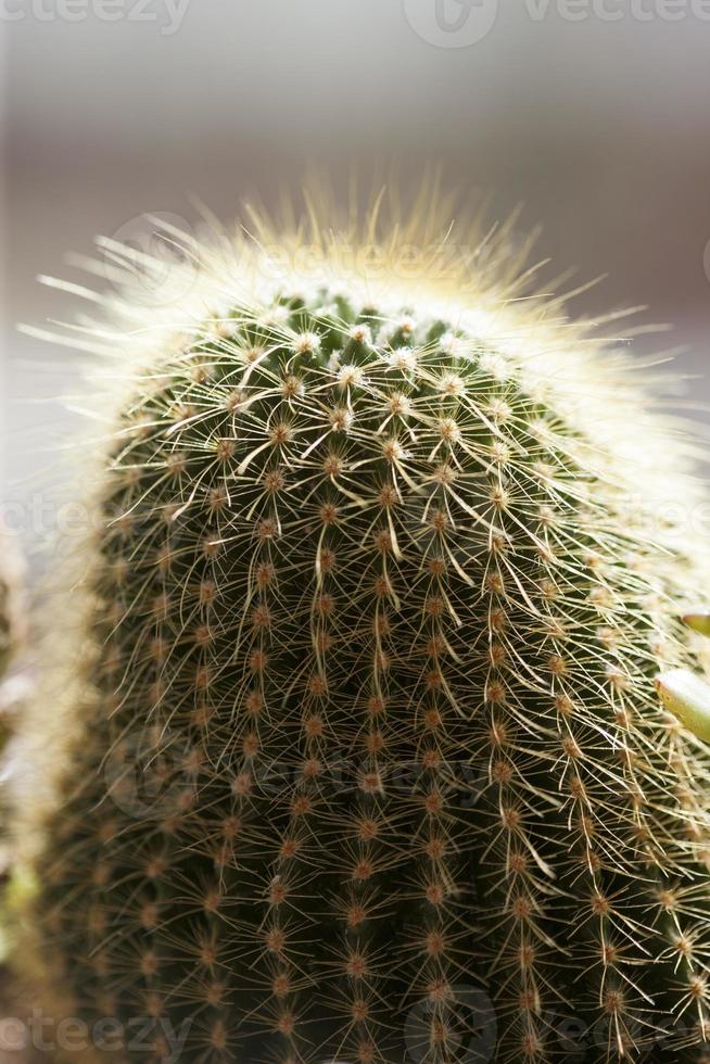 Kaktus, foto