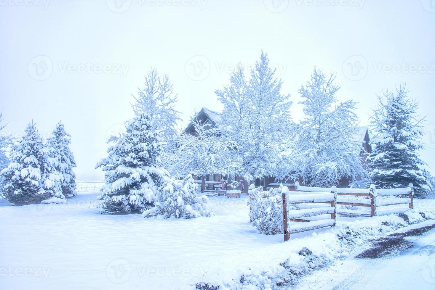 nach dem Schnee foto