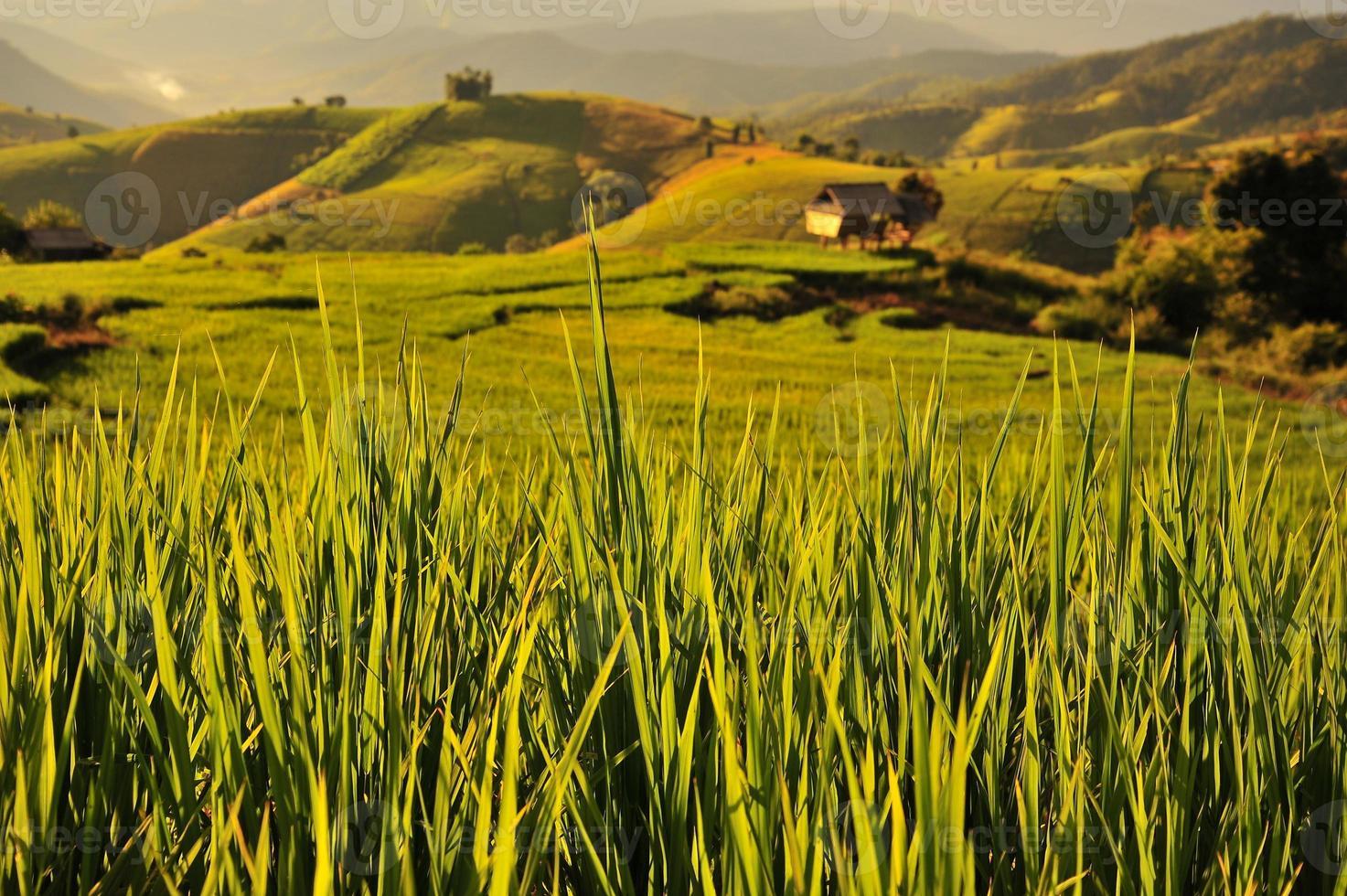 Reisfelder auf dem Berg foto
