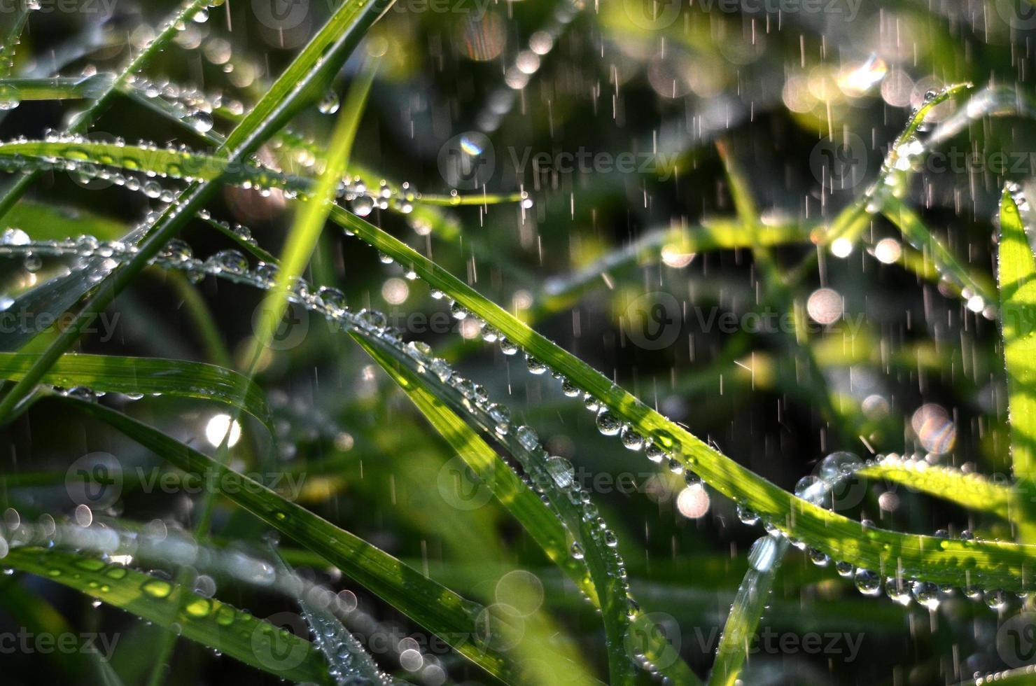 fallende Regentropfen auf einem grünen Gras am Morgen foto