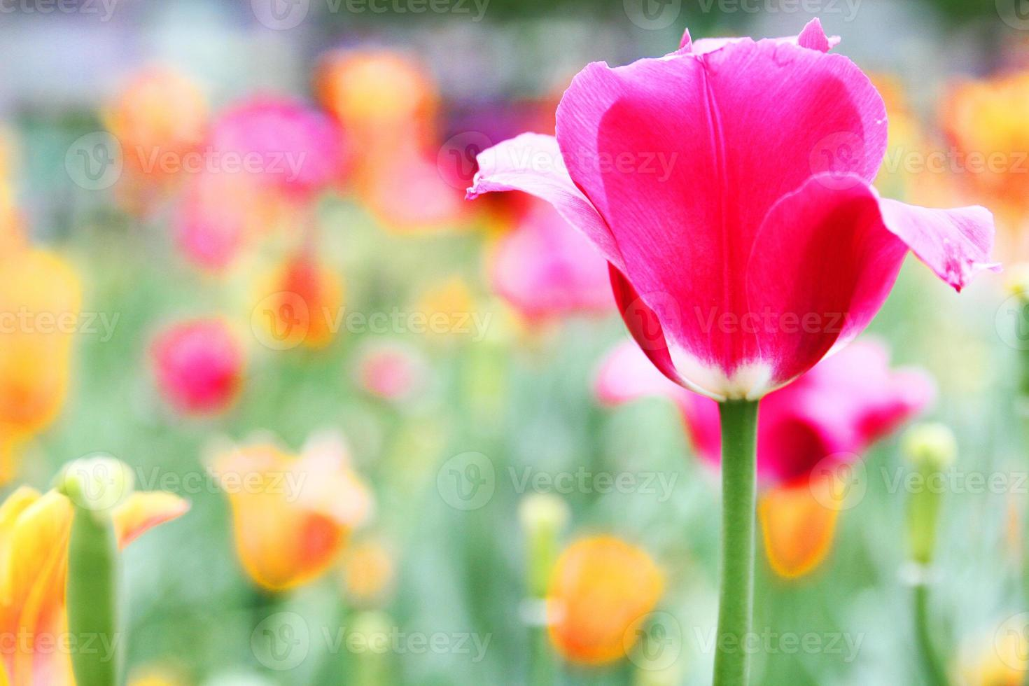 schöne Blumen im Garten foto