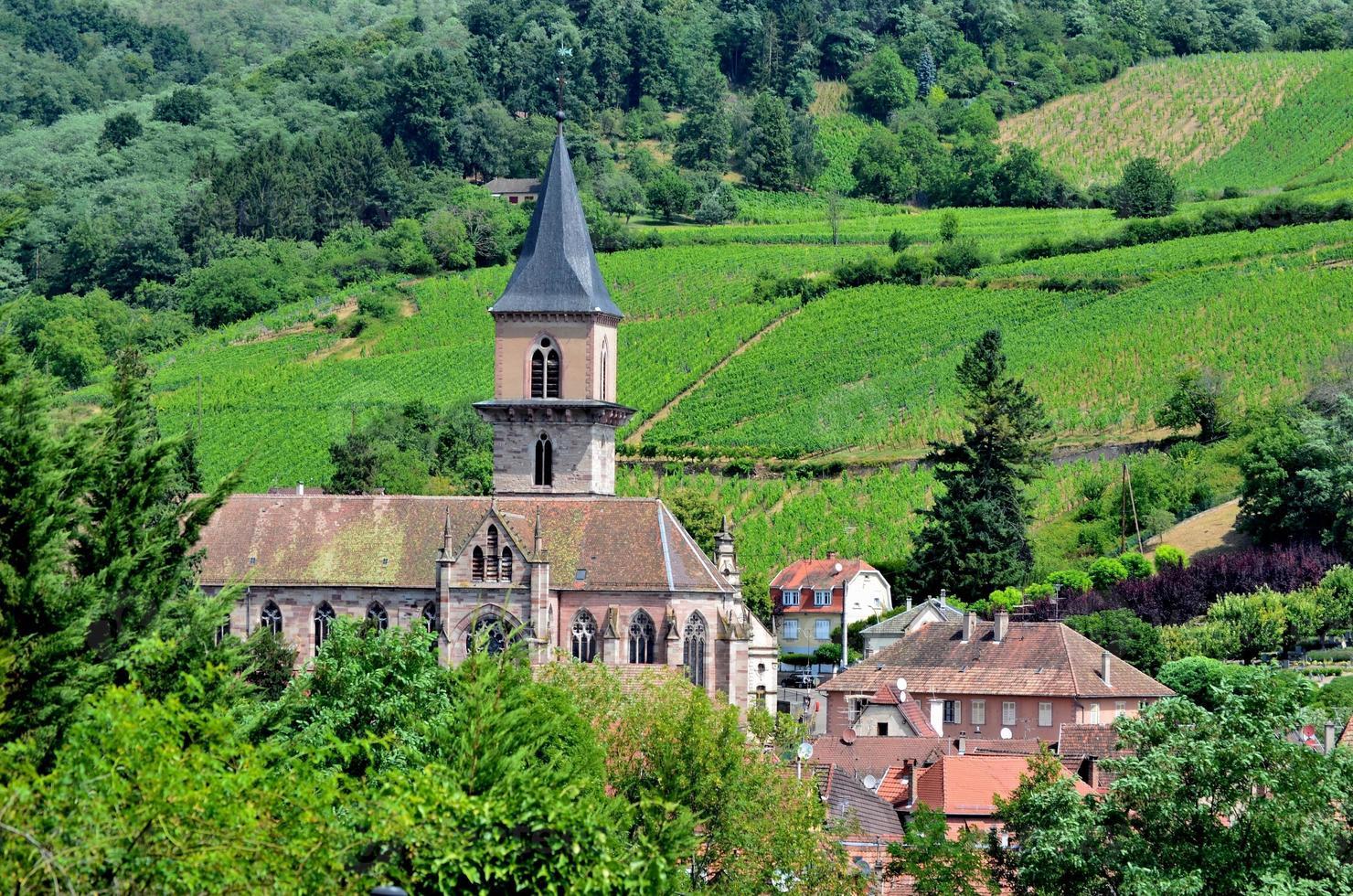 Ribeauville: Kirche, Häuser und Weinberge foto