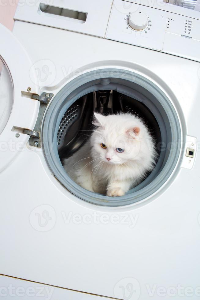 Waschmaschine und Katze foto