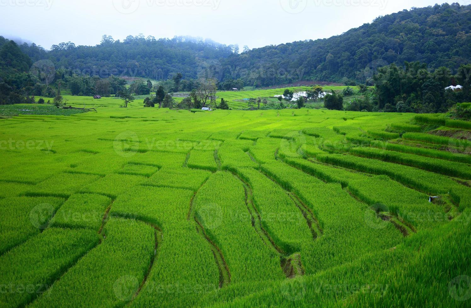 Reisfelder auf terrassierten Hügeln foto