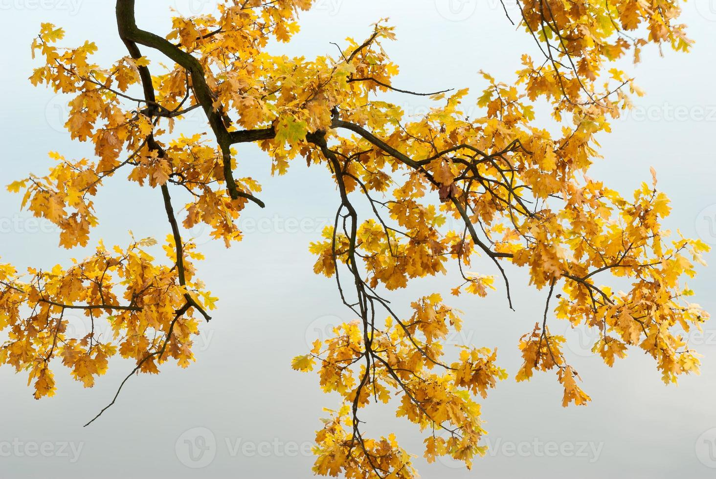 gelbe Blätter auf klarem Hintergrund foto