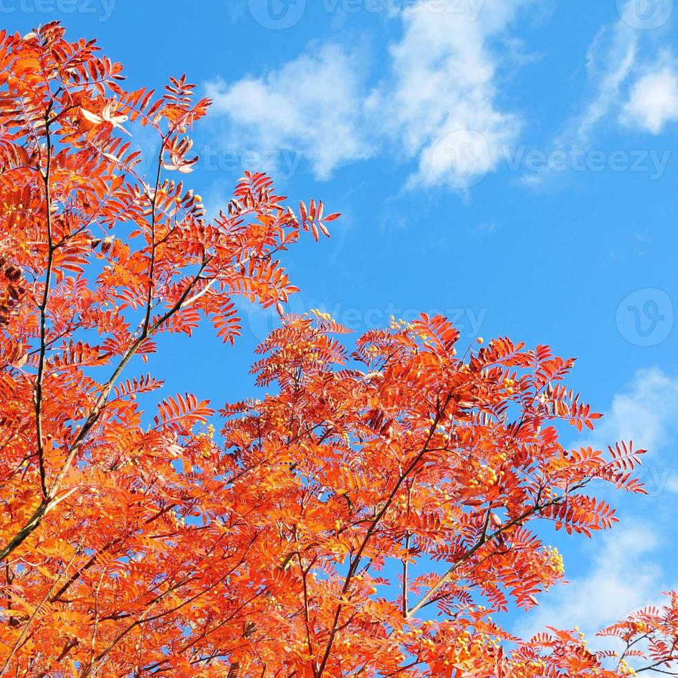rotes Blatt gegen blauen Himmel foto