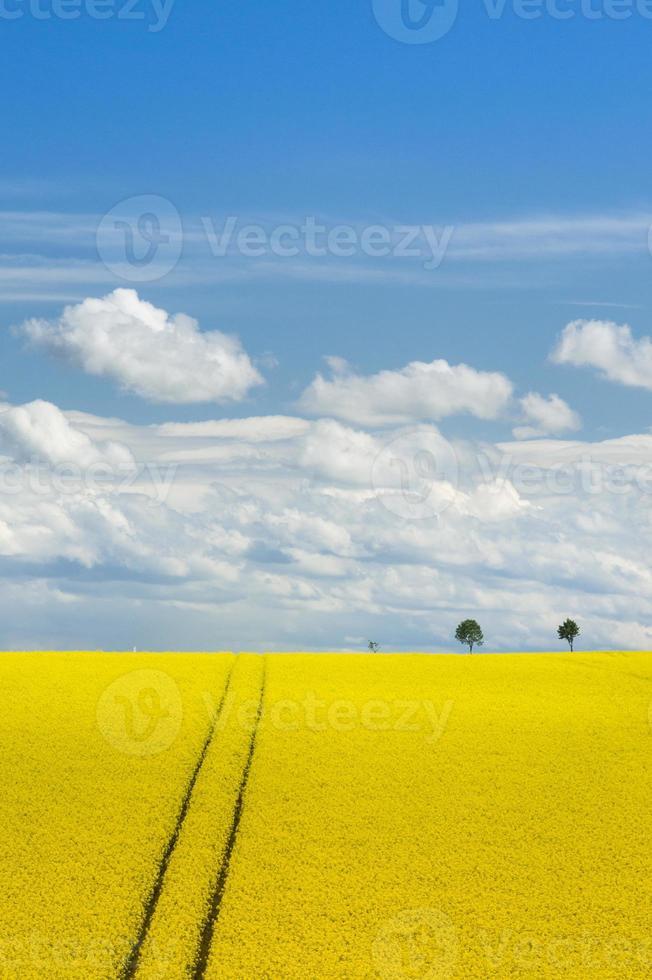 Rapsfeld und romantischer Himmel foto