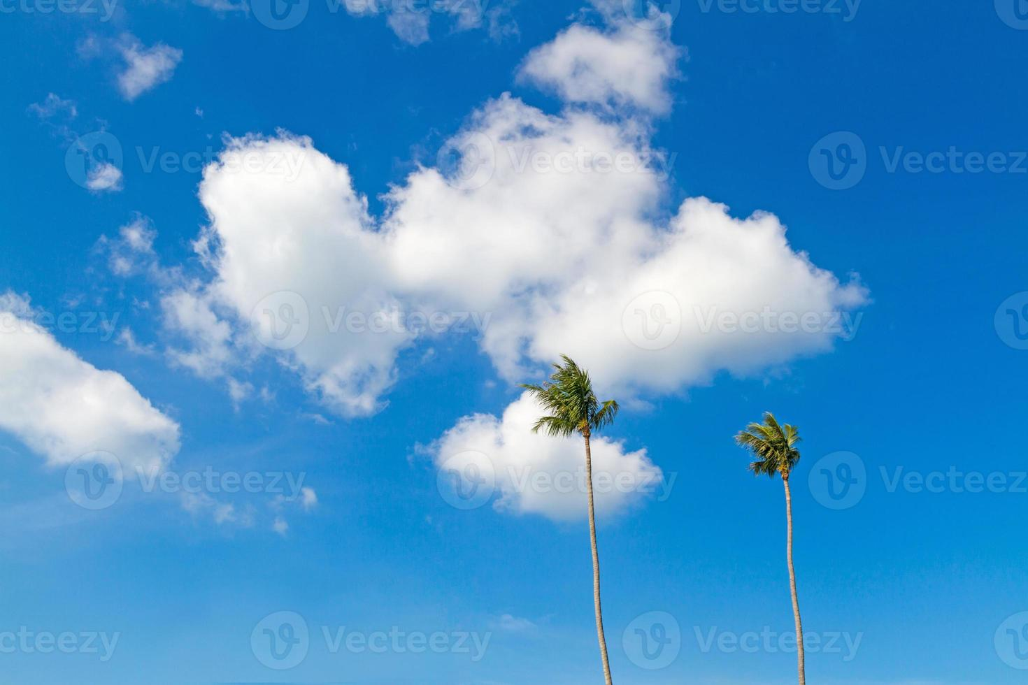 Kokosnussbaum mit blauem Himmel foto