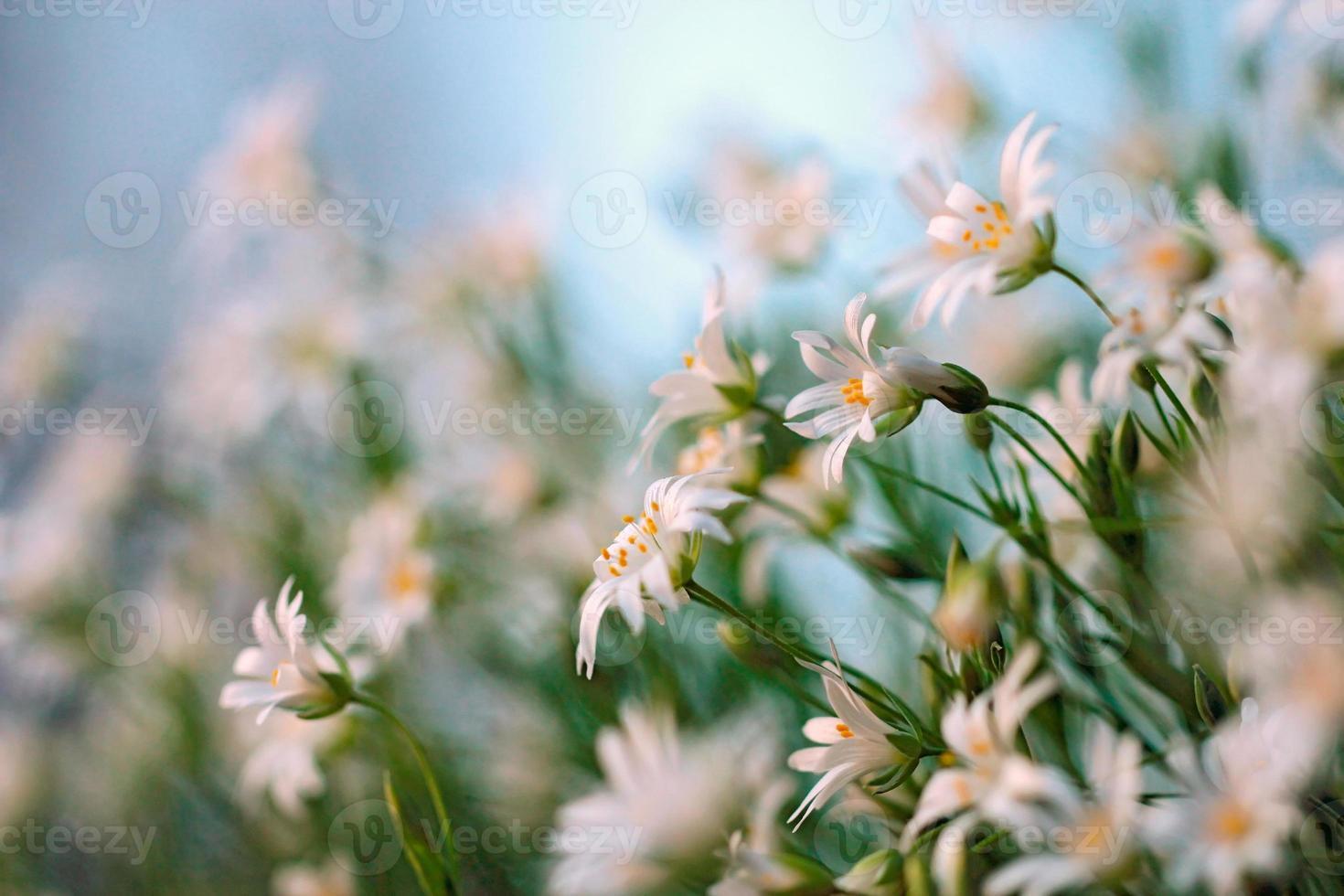 Frühlingsblumen auf blauem Himmel Hintergrund foto