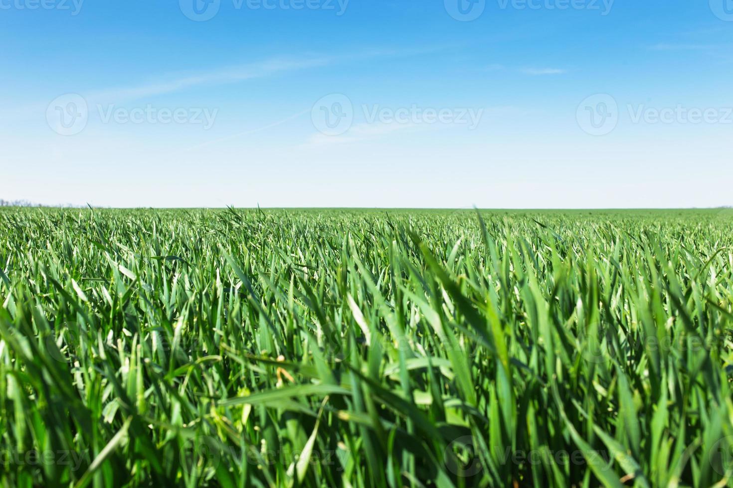 Feld von grünem Gras und Himmel foto
