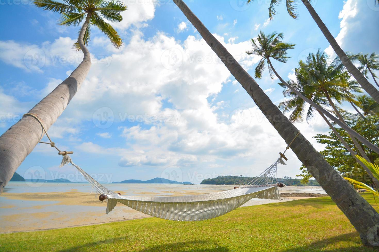 Kokosnussbaum unter blauem Himmel mit Hängematte foto