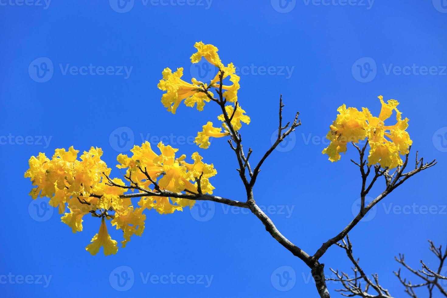 gelber Brunch am blauen Himmel foto