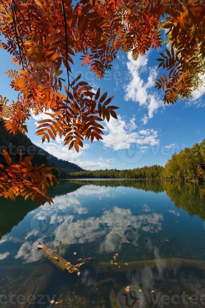 rote Blätter am blauen Himmel foto