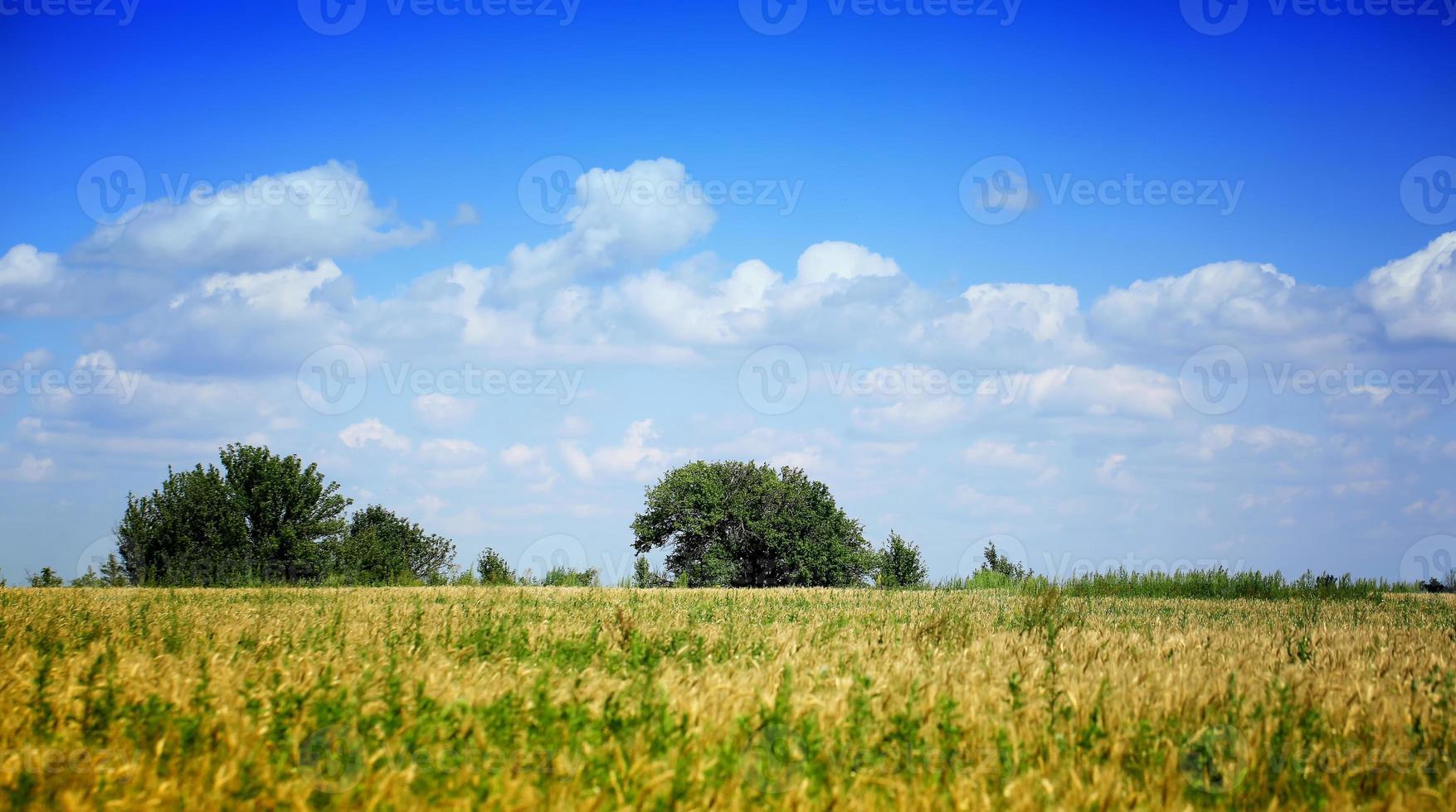 Don Fluss Steppen Landschaft Bäume Himmel Wolken Russland foto