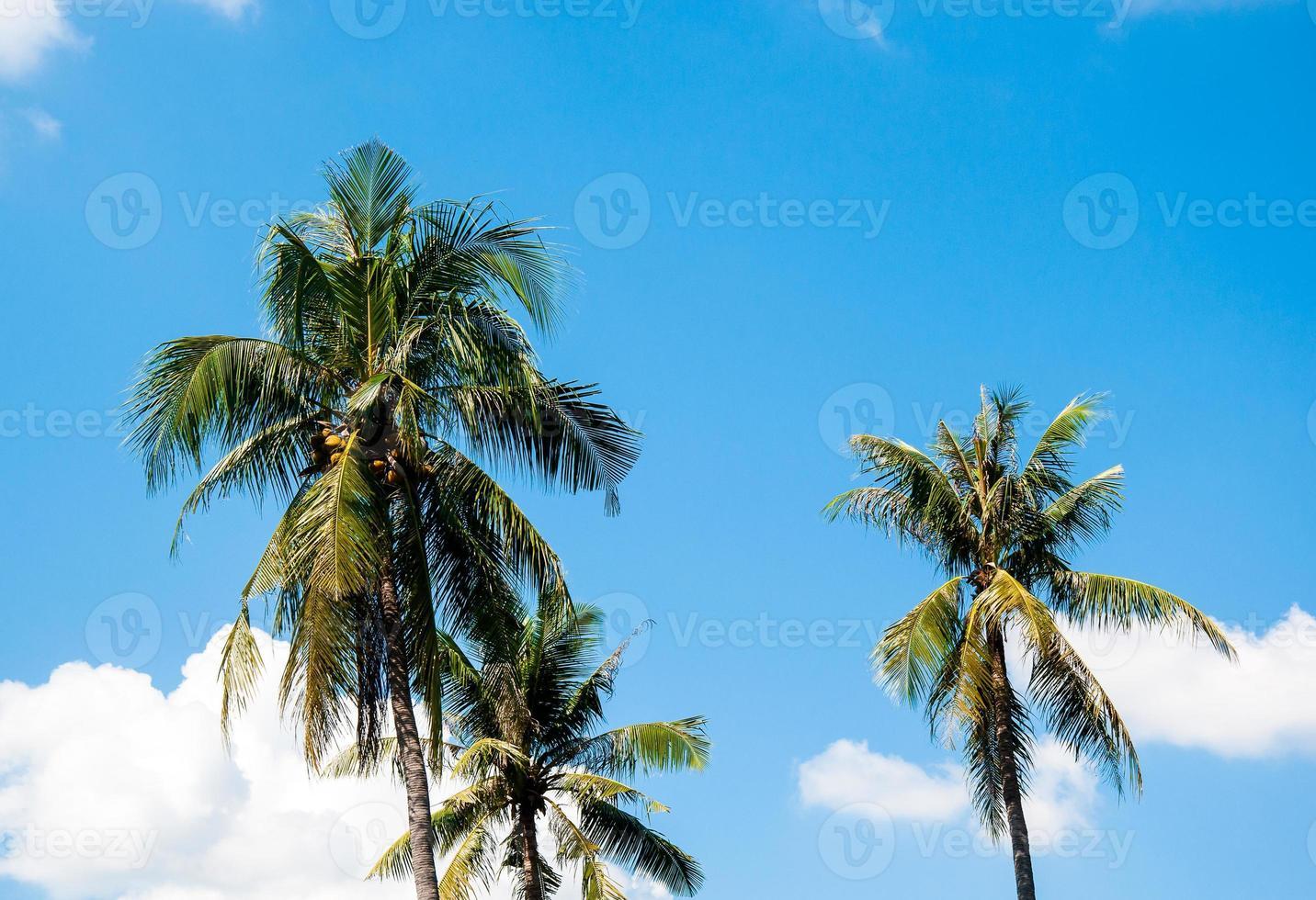 Kokosnussbaum auf blauem Himmel und weißer Wolke foto