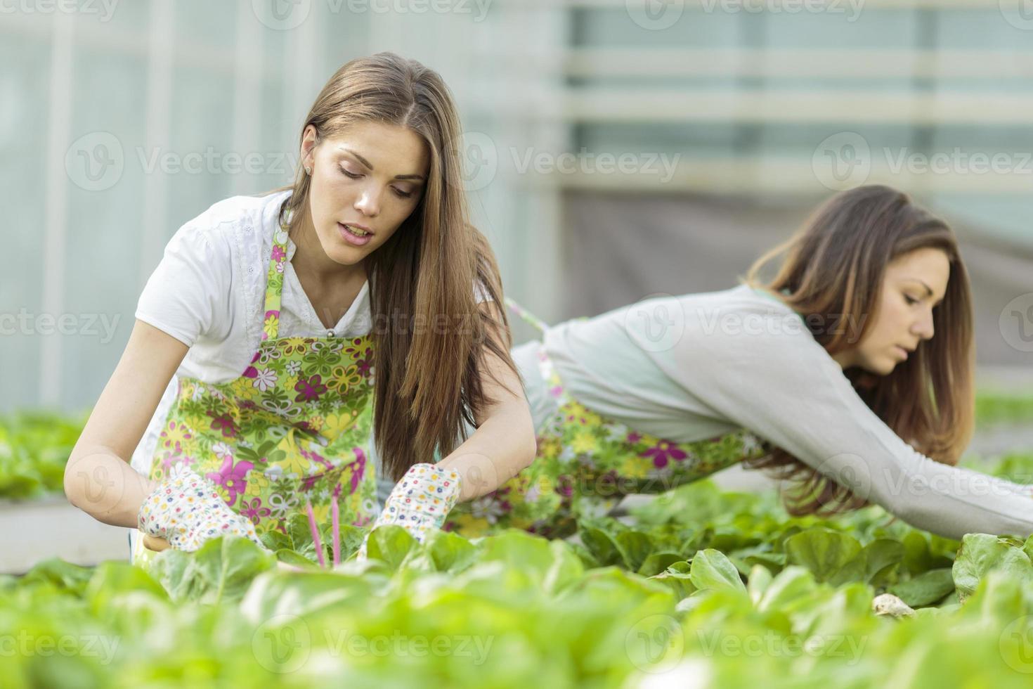 junge Frauen im Garten foto