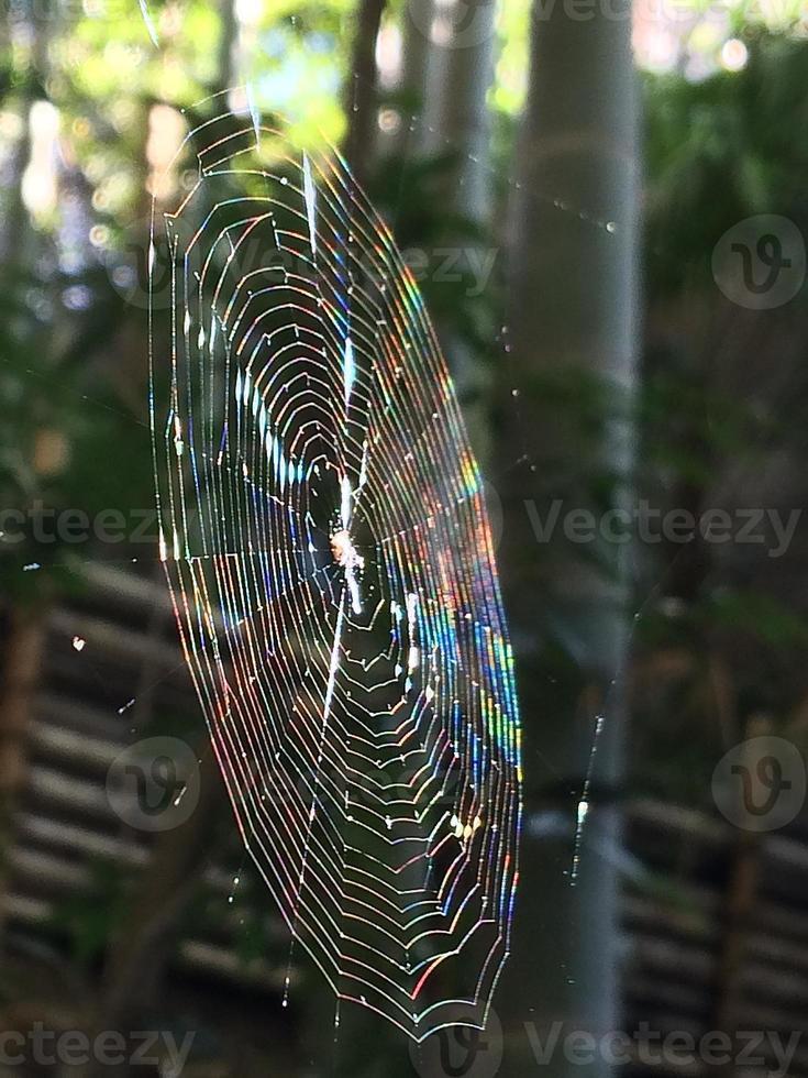 Spinnennetz, das wie ein Regenbogen leuchtet foto
