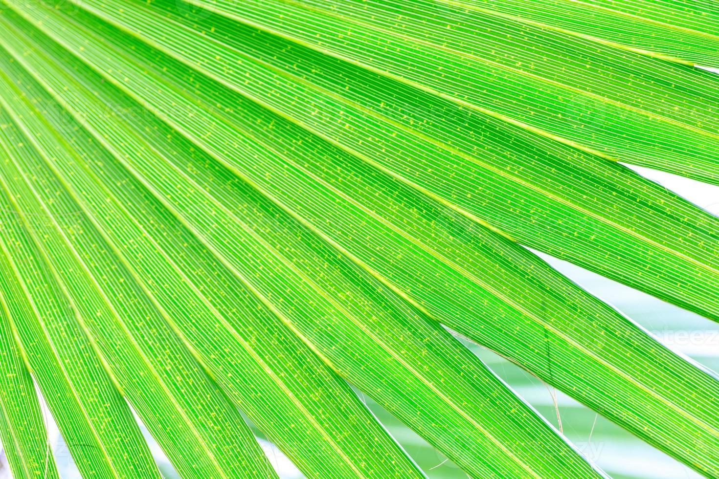 grüner Palmenblatthintergrund foto