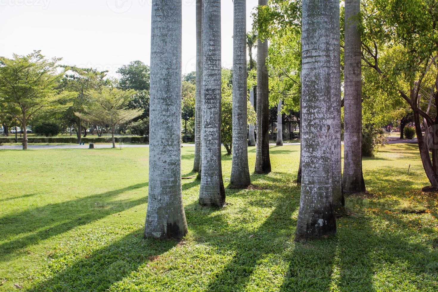 Gruppe von Betelbäumen foto