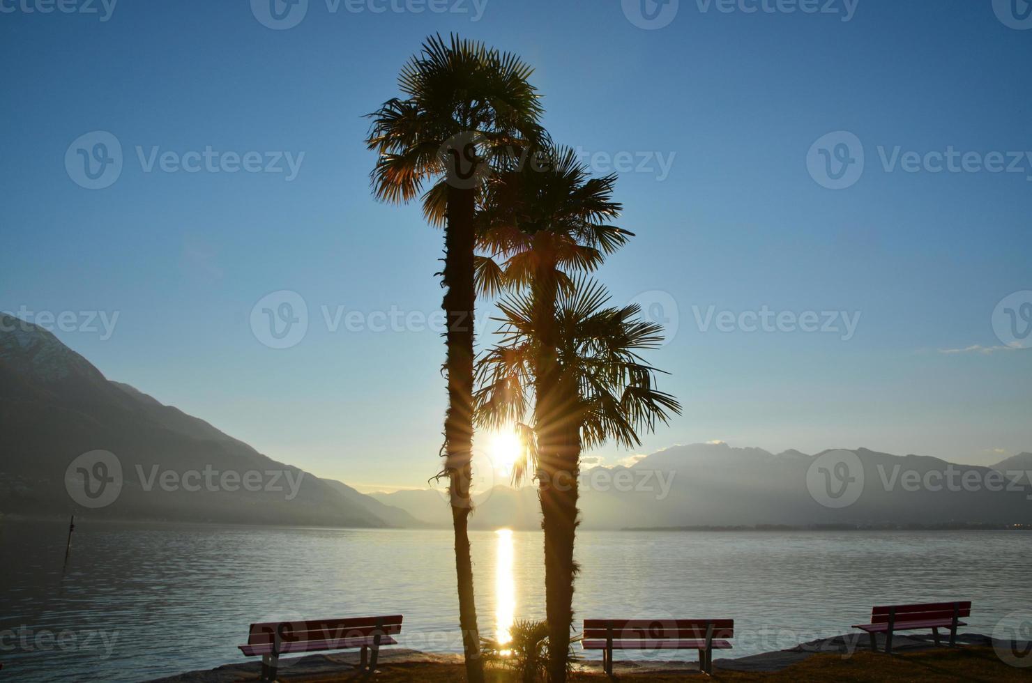 drei Palmen und Bank bei Sonnenuntergang foto