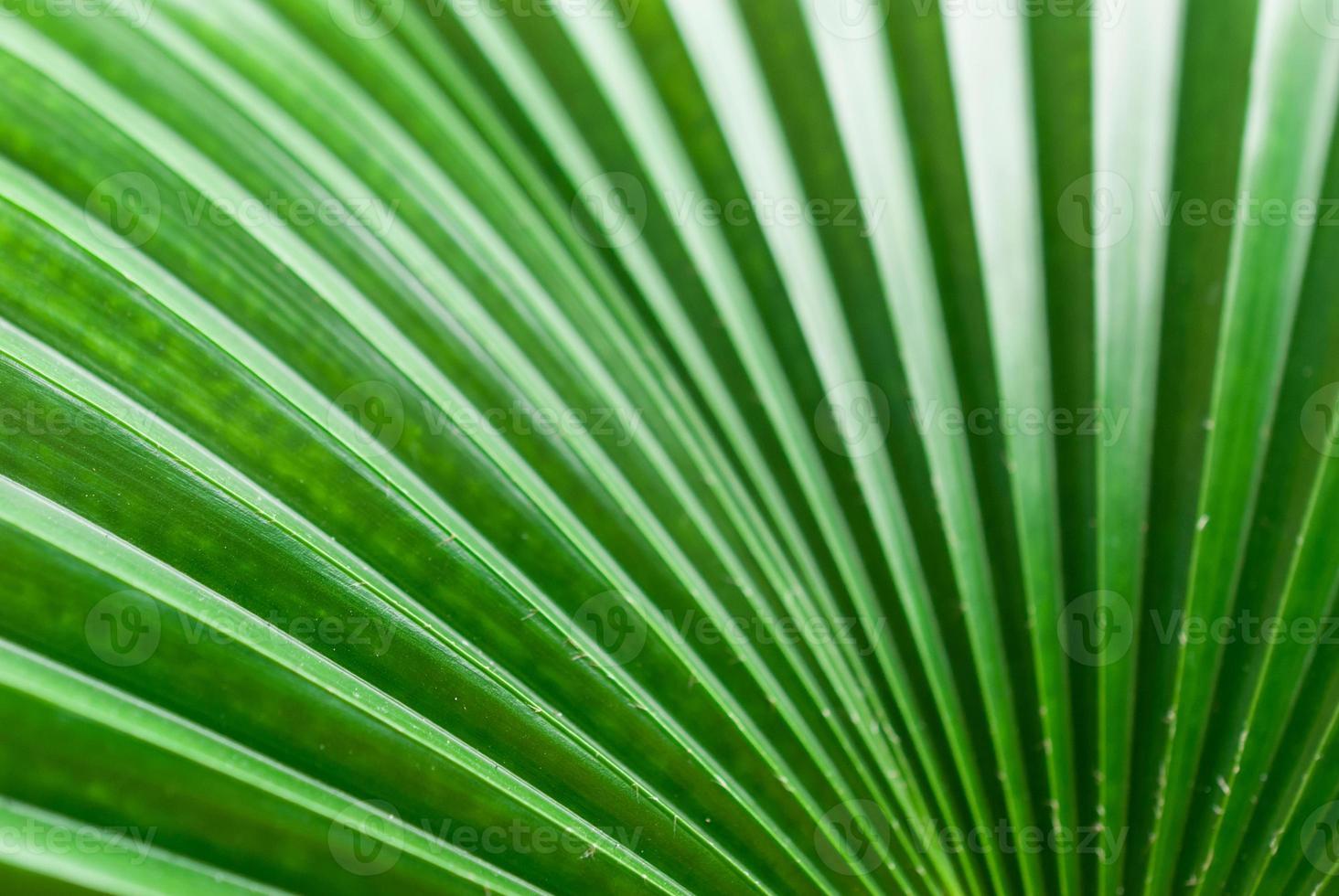 abstraktes Bild des grünen Palmblattes für Hintergrund. foto