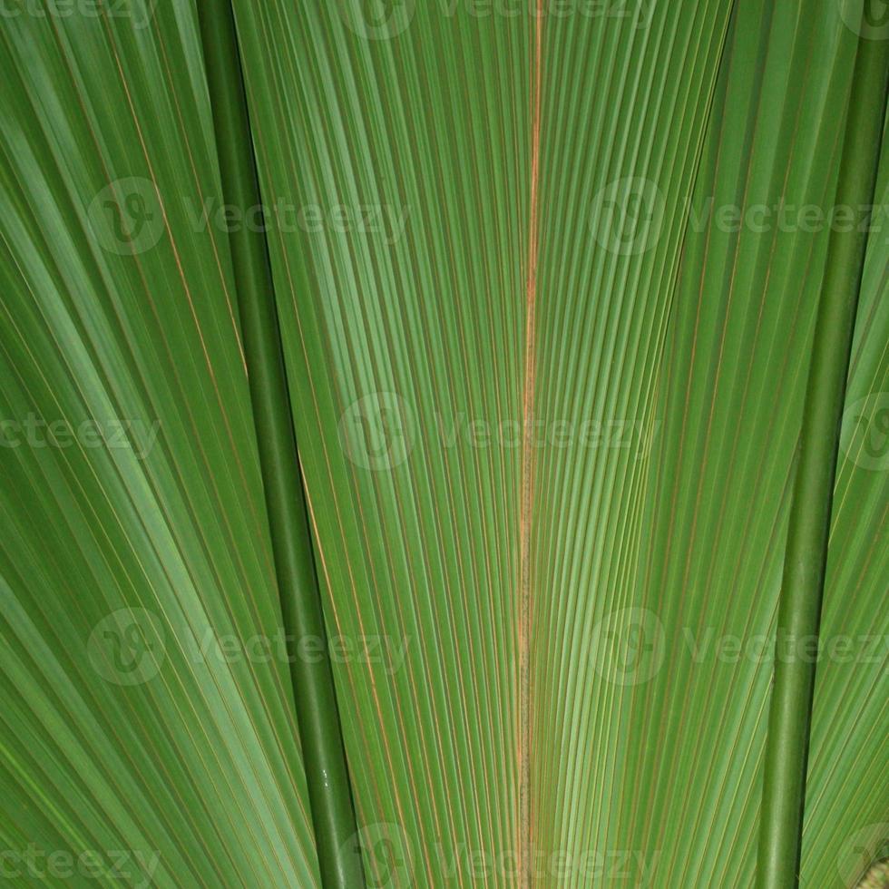 Gros Plan d'une Feuille de Palmier foto