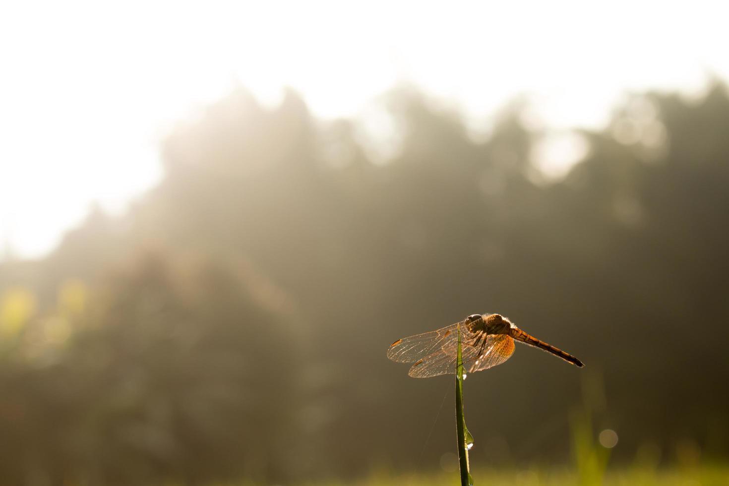 schöne Libelle in der Natur foto