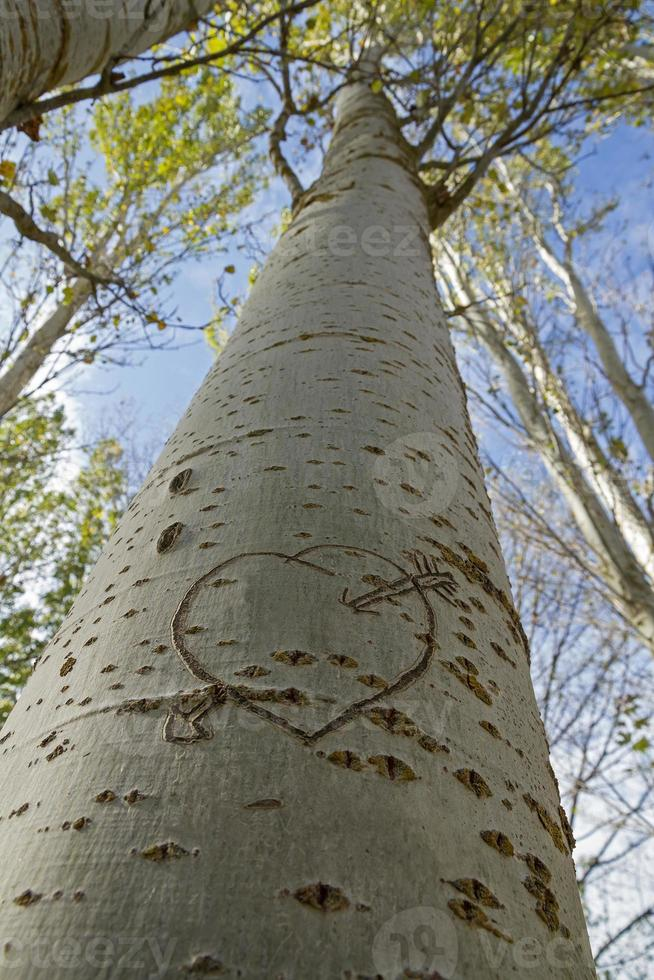 Pfeil und Herz auf einem Baum geschnitzt - Corazon foto