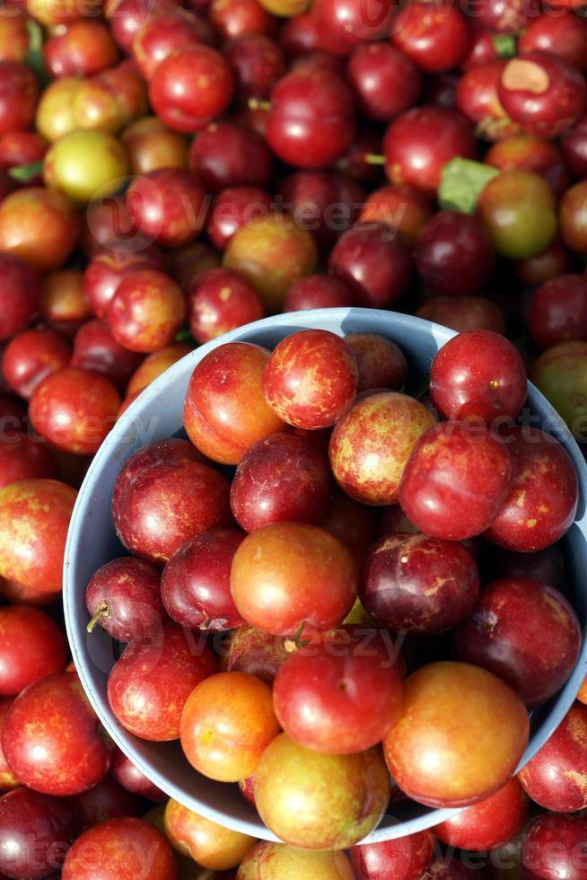 Fruchtstruktur foto
