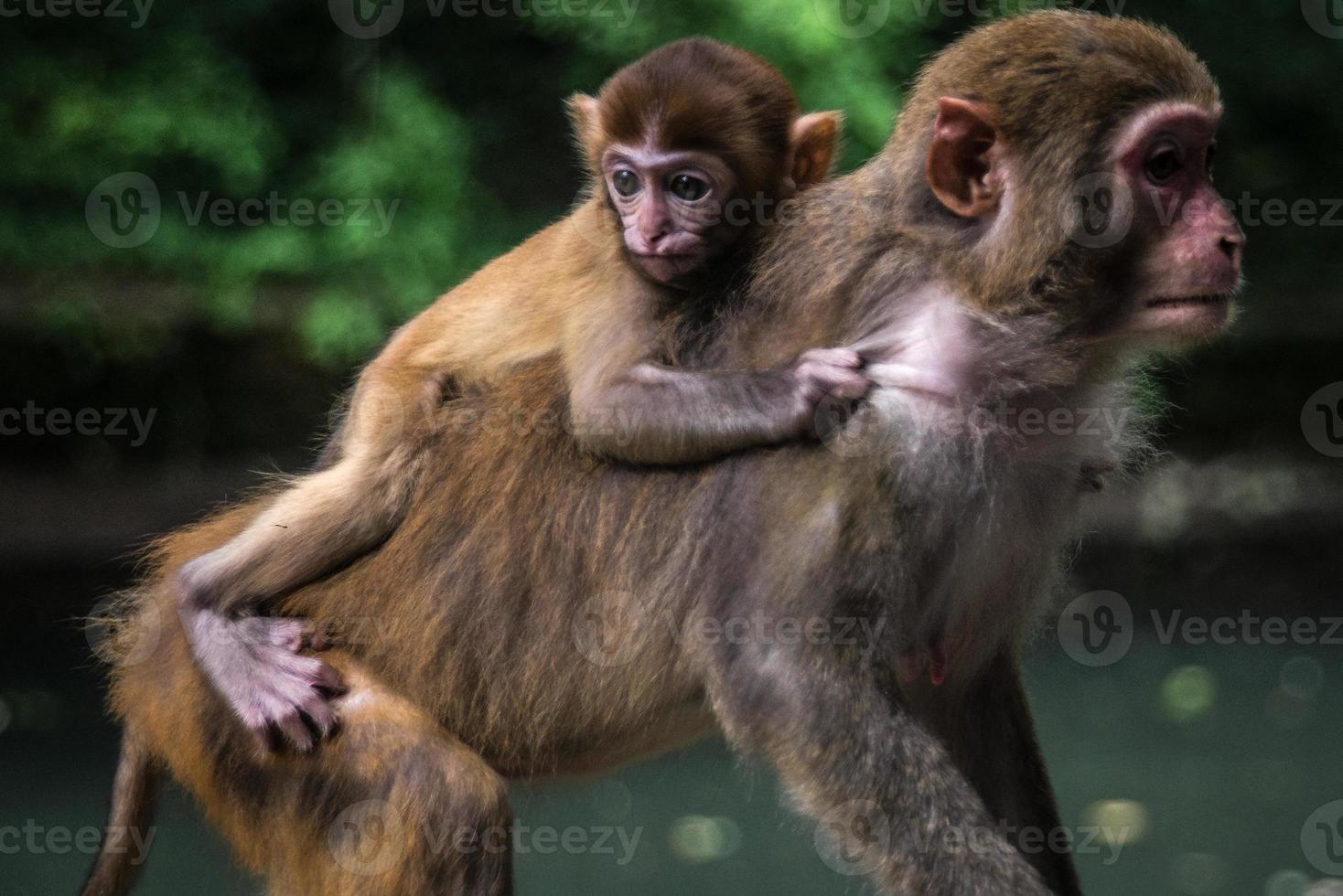 Baby Affe - hängen an foto