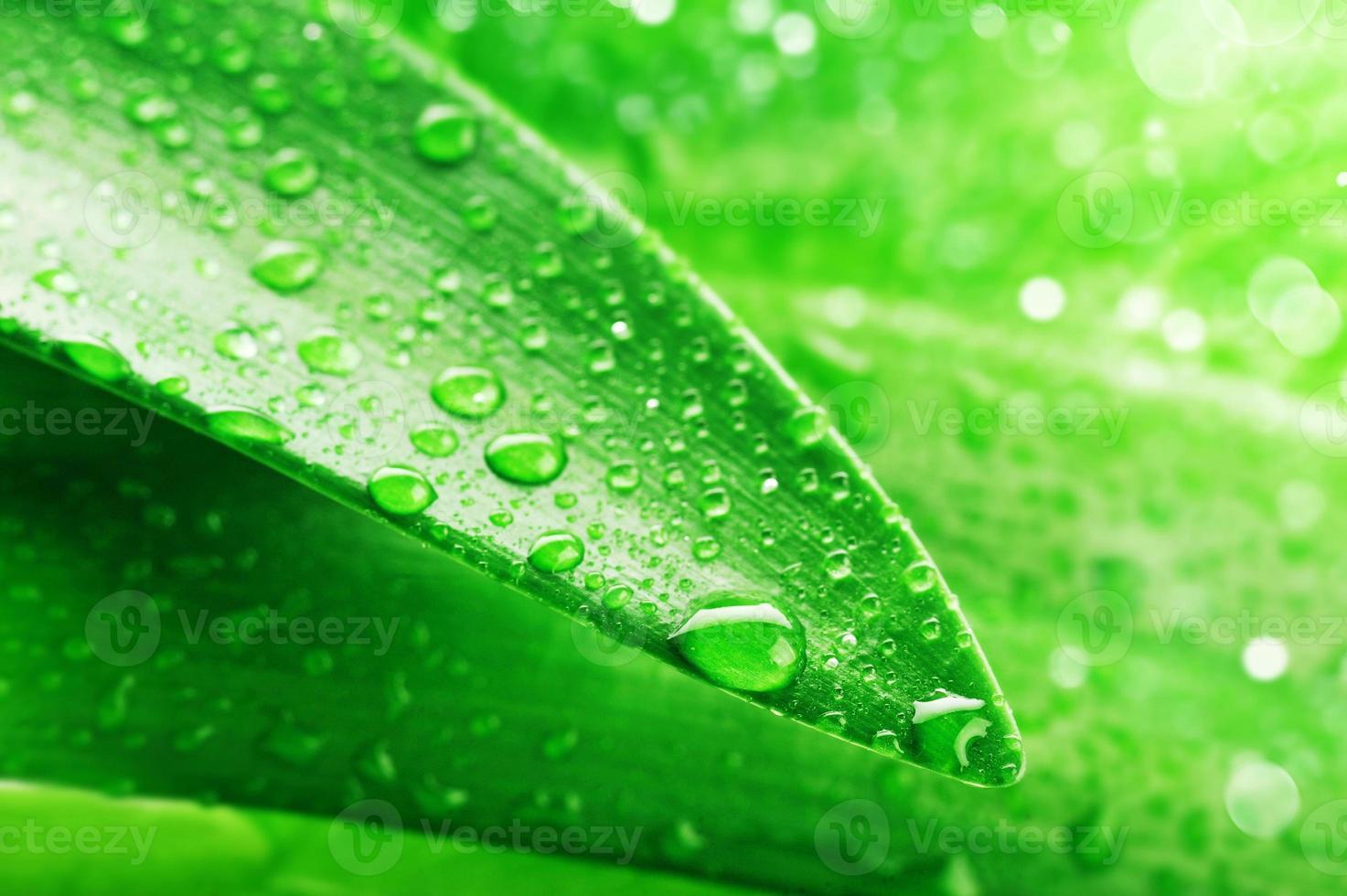 grünes Blatt und Wassertropfen foto
