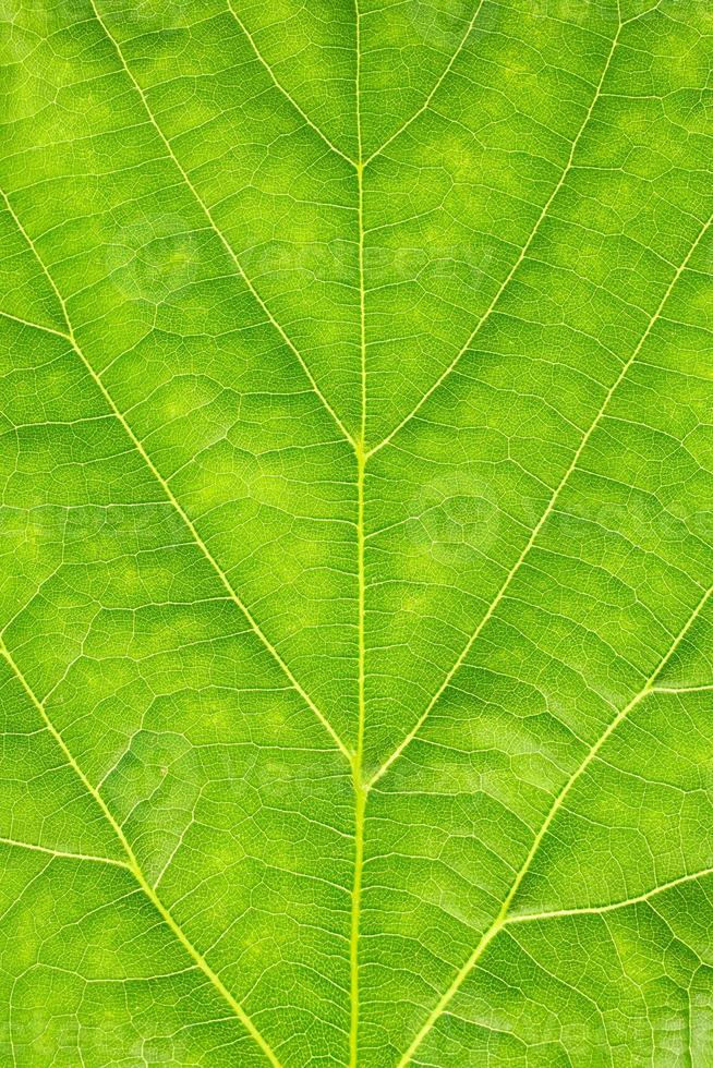Textur des grünen Blattes foto