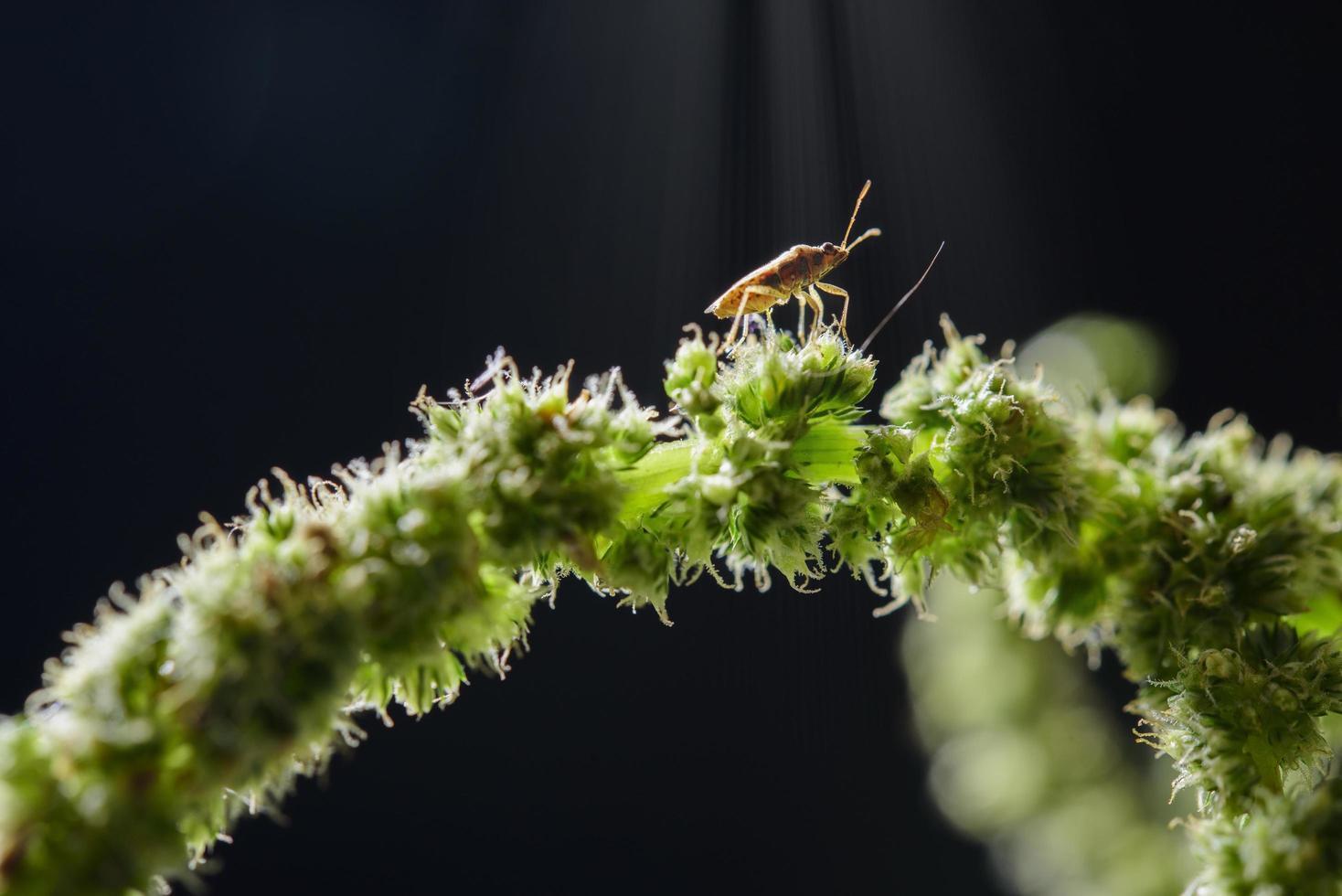 Insekt auf einer Pflanze foto