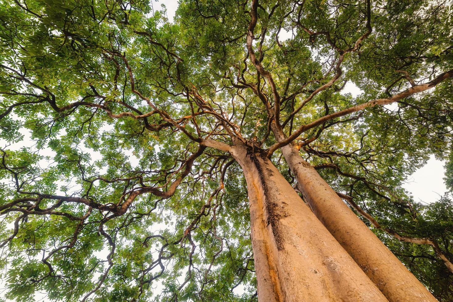 einsamer Baum mit grünem Laub foto