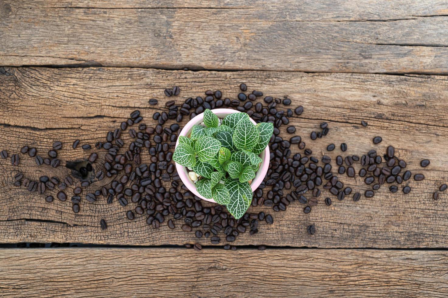 Pflanzentopf und Kaffeebohnen auf Holztisch foto