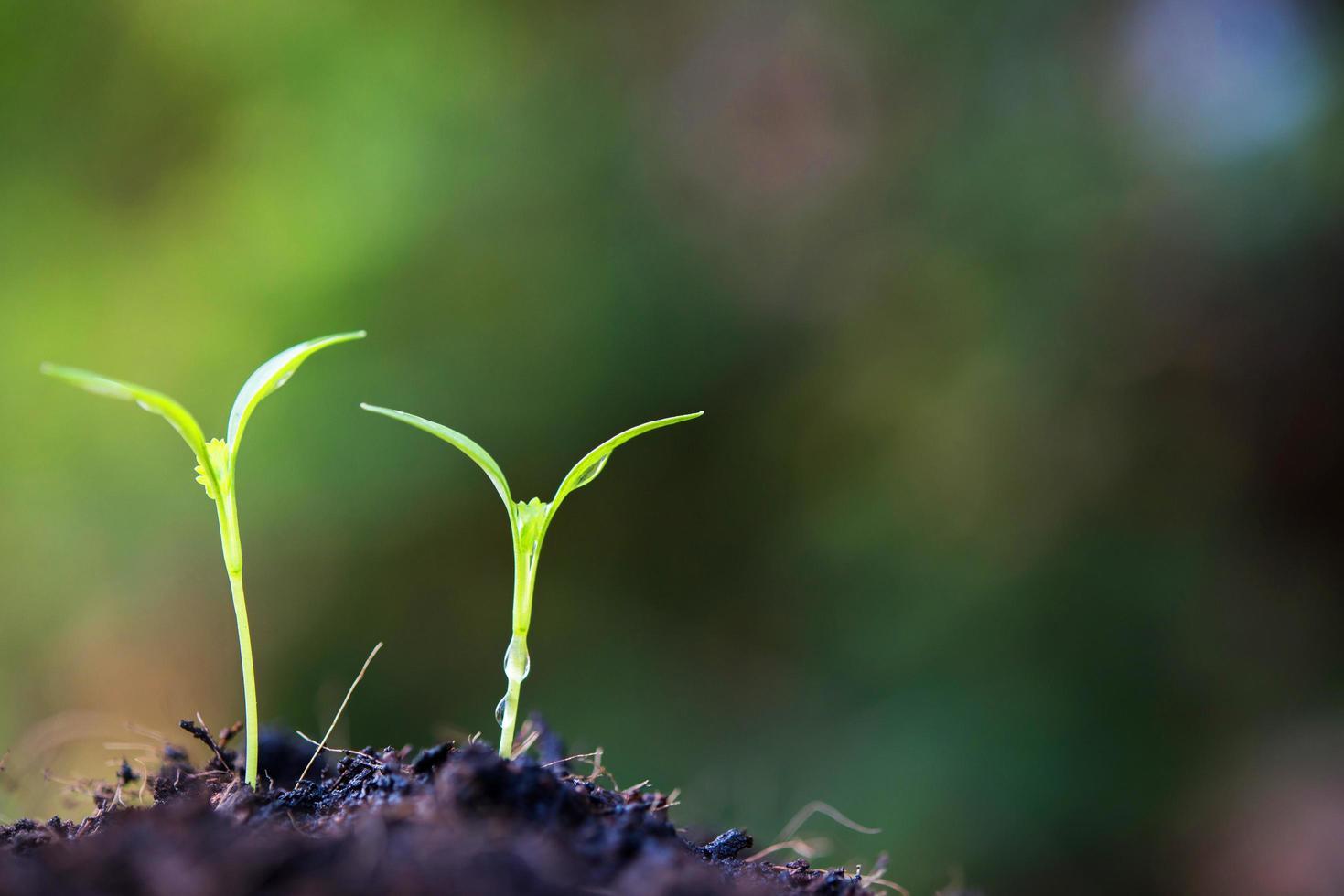 Nahaufnahme sprießende Pflanze in der Natur foto