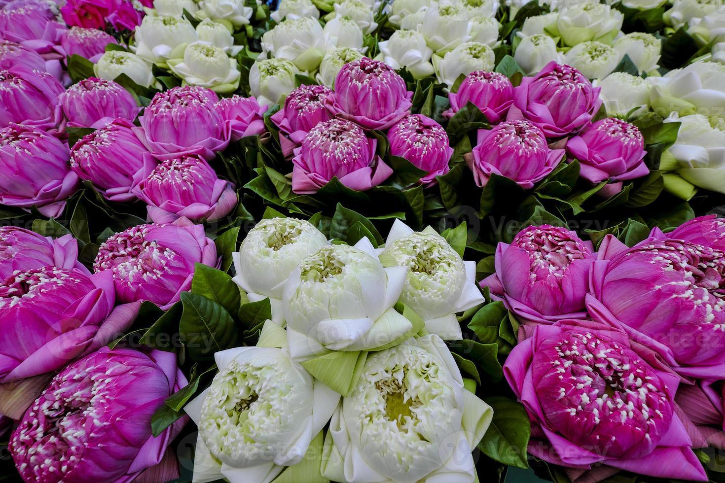 schöne Lotusblumen foto