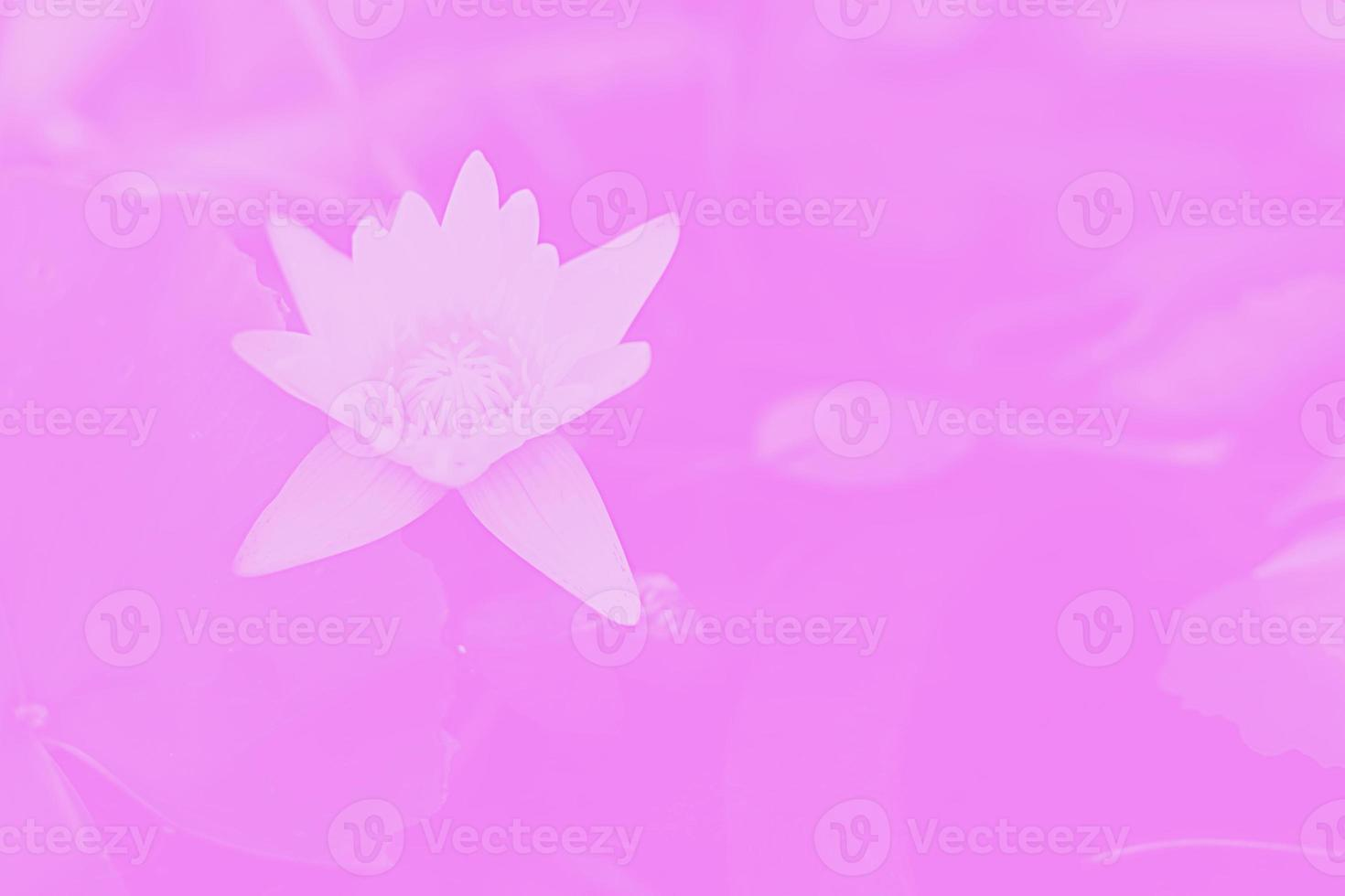 Blüte Lotusblume foto