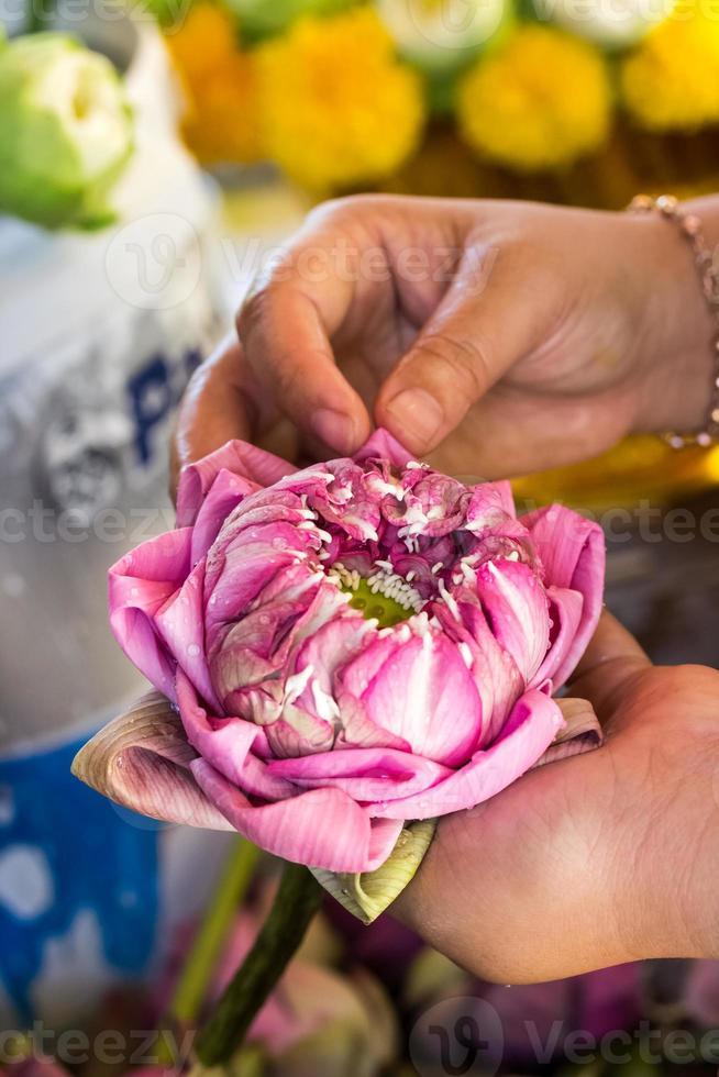 Frau faltet Blütenblatt rosa Lotus für beten Buddha in Thai foto