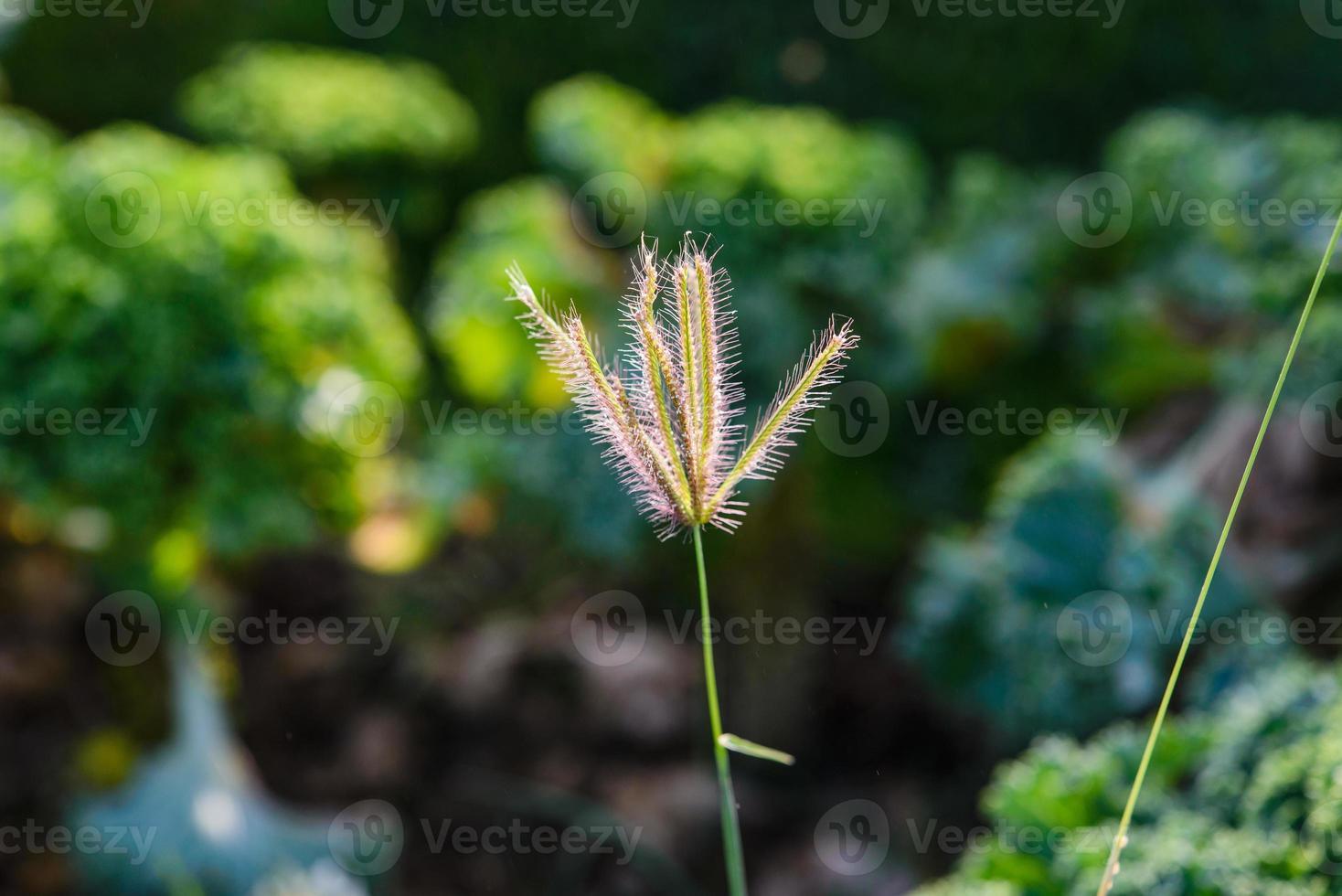 verschiedene tropische Blumen. bunter Hintergrund im Dubai-Wundergarten. foto