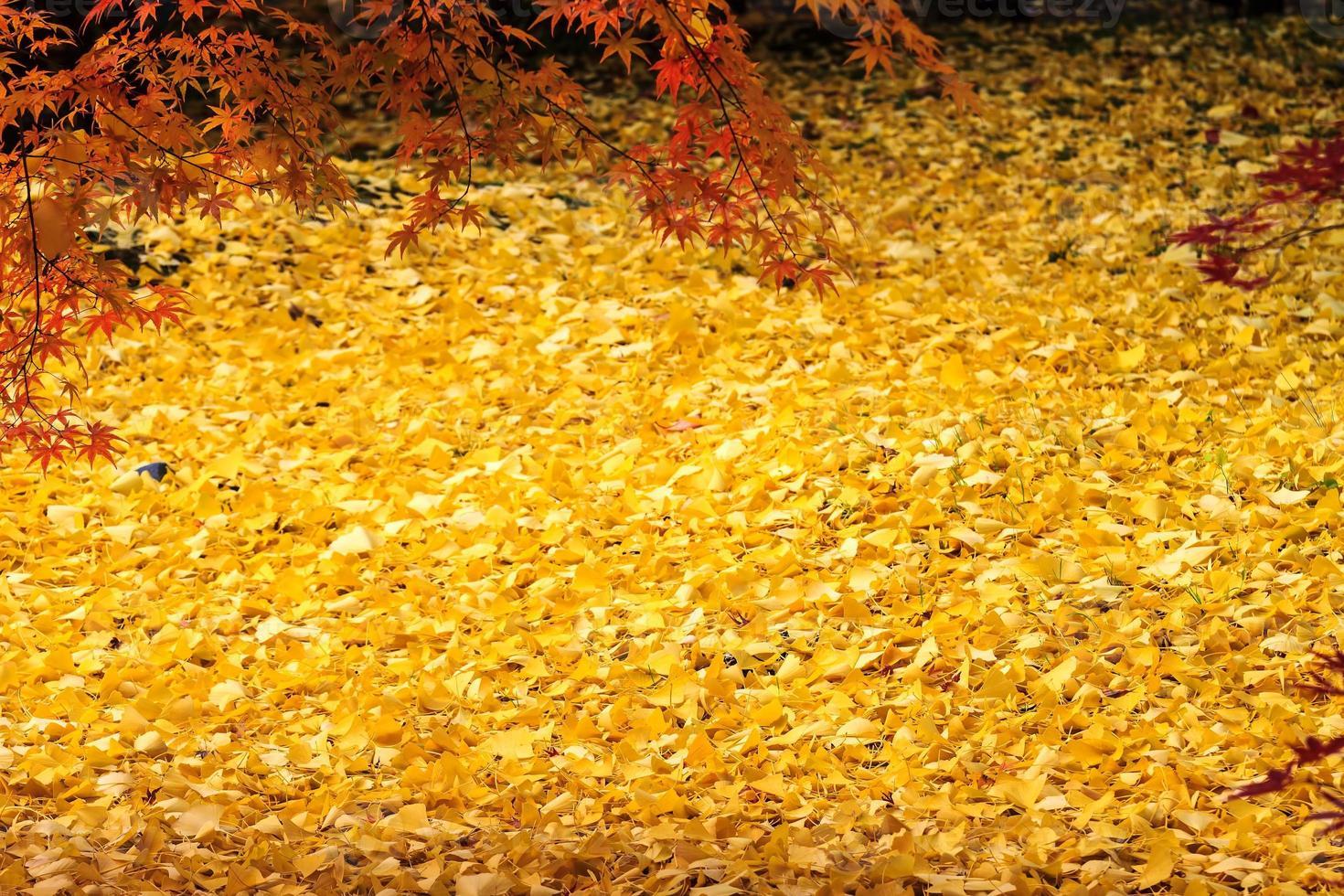 japanischer Herbstgarten mit Ahorn foto