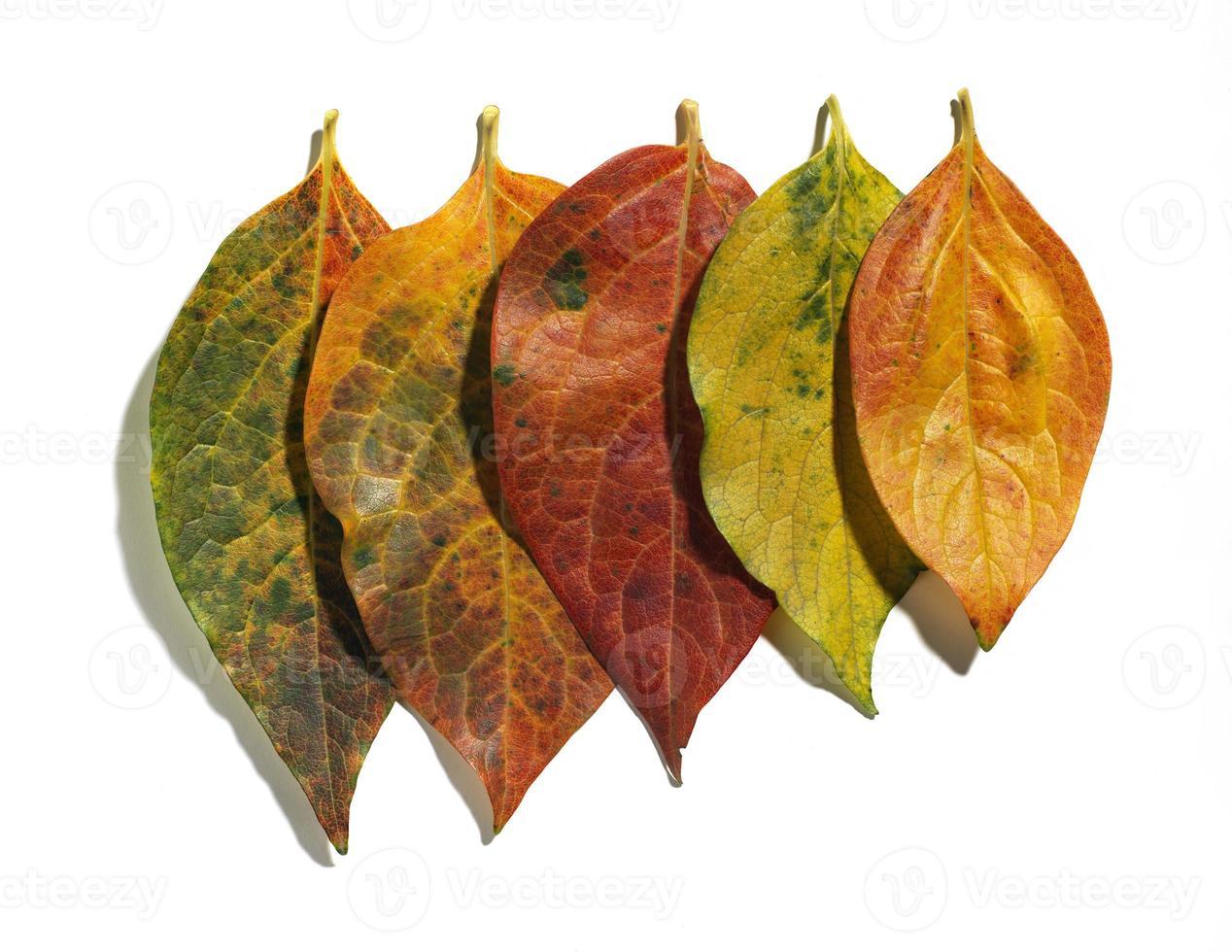 Herbst foto