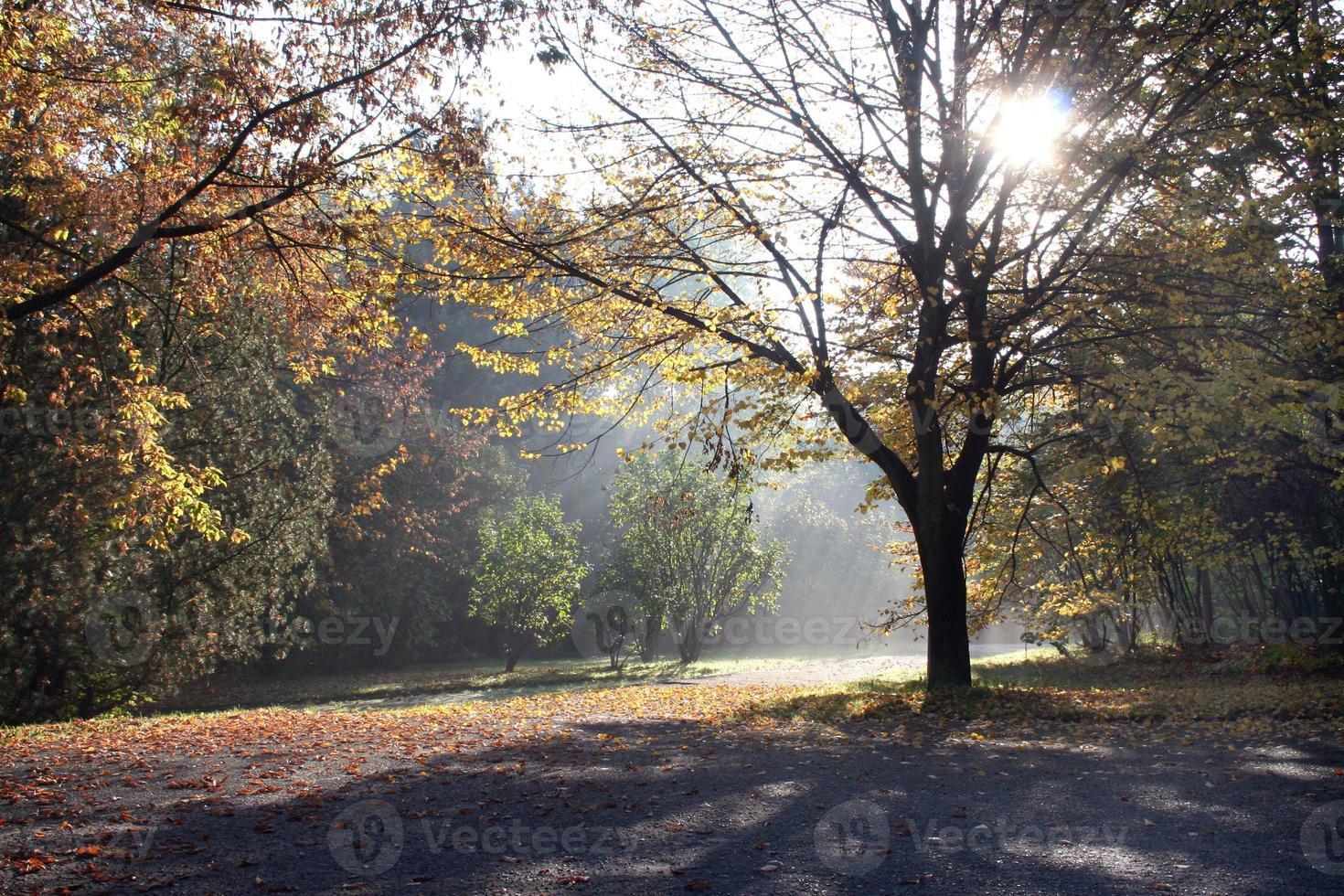 slawischer Herbst foto
