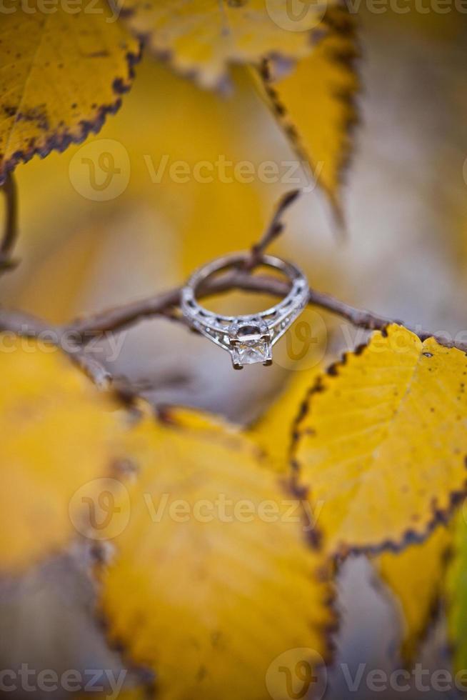 Herbst Engagement foto